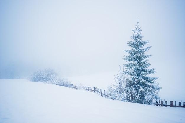 Encantador paisaje pintoresco de invierno de grandes ventisqueros de un río que fluye entre ellos contra una superficie de alto abeto y niebla blanca en un nublado día de invierno helado