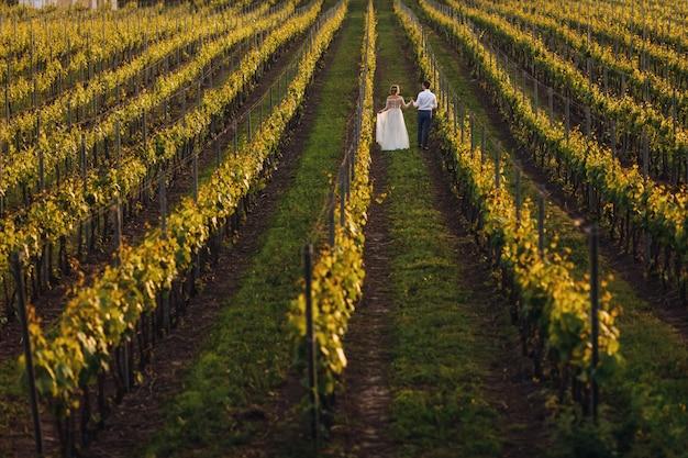 La encantadora pareja de novios caminando en los viñedos