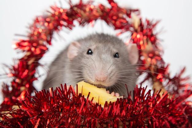 Encantadora rata dumbo en una cesta con adornos navideños