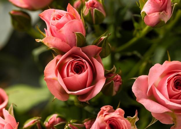 Endecha plana de hermosas flores color de rosa de colores