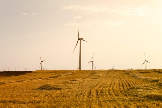 Energía eólica. campo de trigo y cielo azul