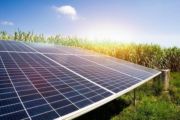 Energía solar en la granja de azúcar, energía verde, energía natural para el agricultor.