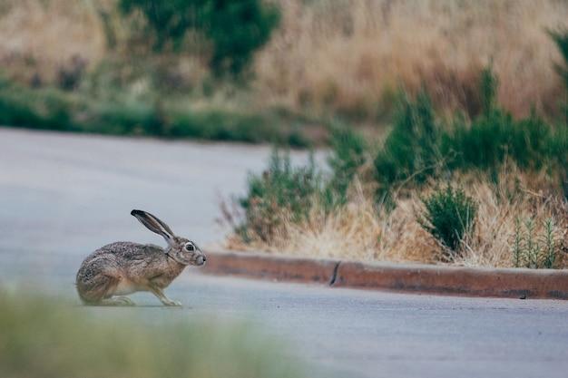 Enfoque selectivo de conejo marrón y negro en la carretera gris cerca de la hierba verde