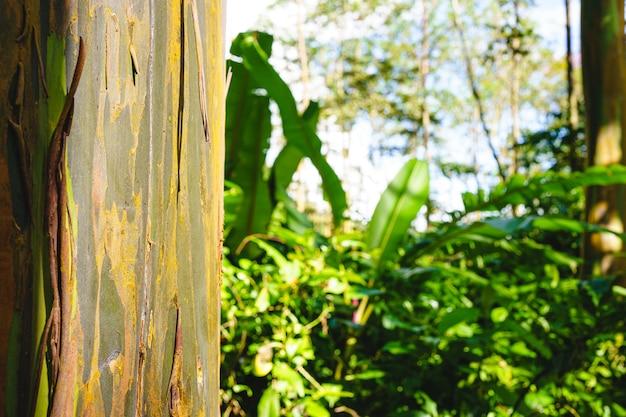 El enfoque selectivo en un tronco desgastado de un árbol en la jungla