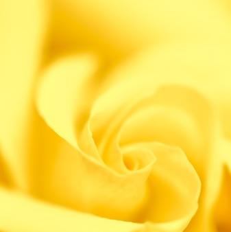 Enfoque suave fondo floral abstracto flor rosa amarilla flores macro telón de fondo para la marca de vacaciones