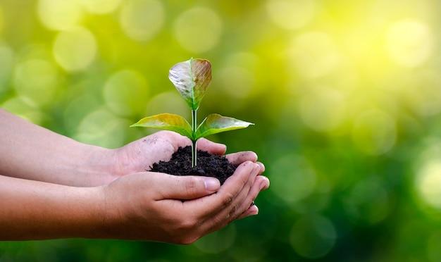 Entorno en manos de árboles que crecen plántulas. verde bokeh