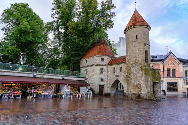 Entrada a la ciudad medieval de tallin estonia con su torre defensiva y puestos de flores.