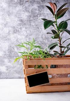 Entrega de la planta. flor verde en caja de madera.