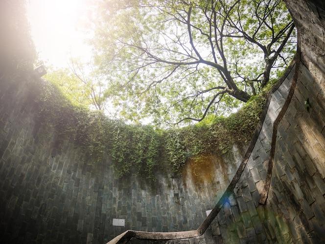 Escalera en túnel con muchos árboles y hierba verde en singapur - fort canning park, singapur