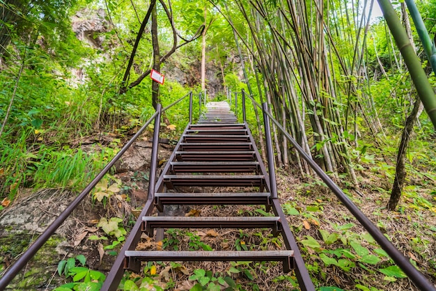 Escalera de madera en mitad de un bosque
