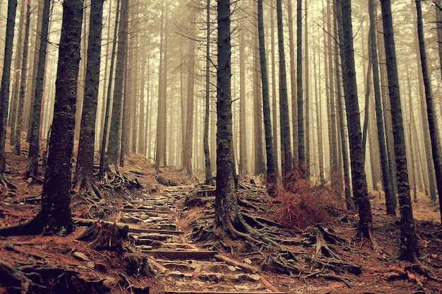 Escalera de niebla vegetación aventura líder