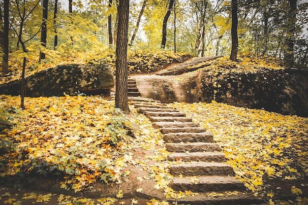Escalera de piedra sembrada de hojas amarillas caídas en el parque de otoño