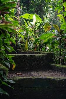 Escaleras cubiertas de musgo rodeadas de plantas verdes.