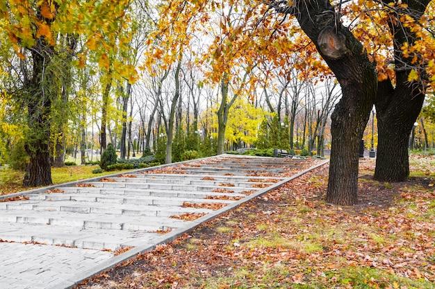 Escaleras en un parque cubierto de hojas en día de otoño con luz solar