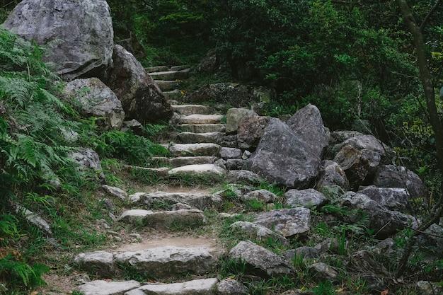 Escaleras de piedra que conducen al bosque.