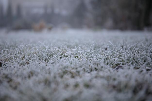 Escarcha de hielo en las agujas de un arbusto de enebro en la soleada mañana de invierno