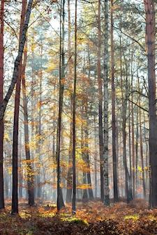 Escena de bosque otoñal con rayos de luz a través de los árboles.