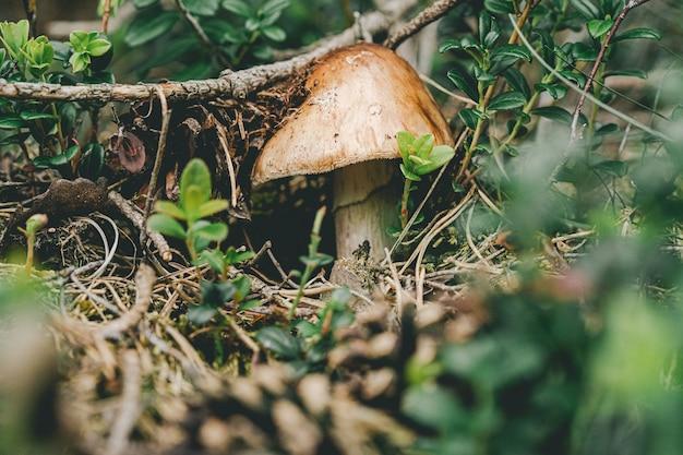 Escena en un bosque con una seta.