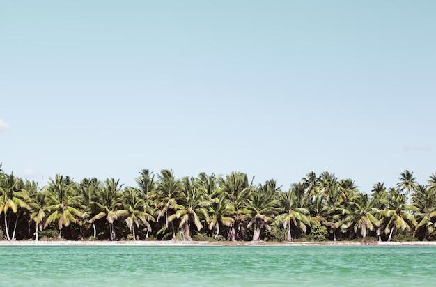 Escena de verano con playa tropical y mar azul