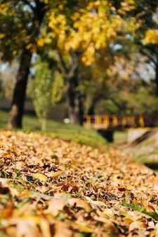 Escena hermosa del otoño con el fondo borroso del parque