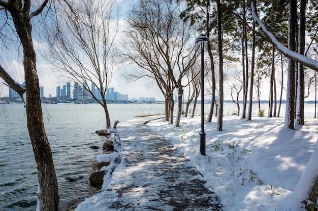 Escena de nieve del parque de invierno