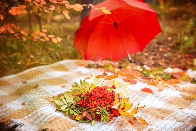 Escena de otoño a cuadros con racimos de bayas de serbal con hojas en ramo de hierba amarilla y roja