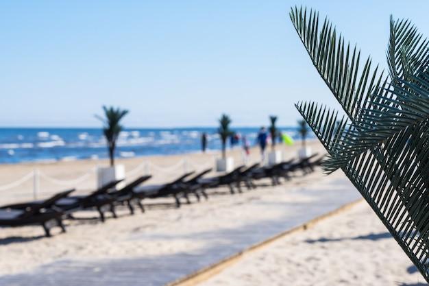 Escena de playa con hojas de palmeras y vista blerred de más largos en el paisaje de verano.