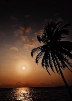Escena de la puesta del sol tropical