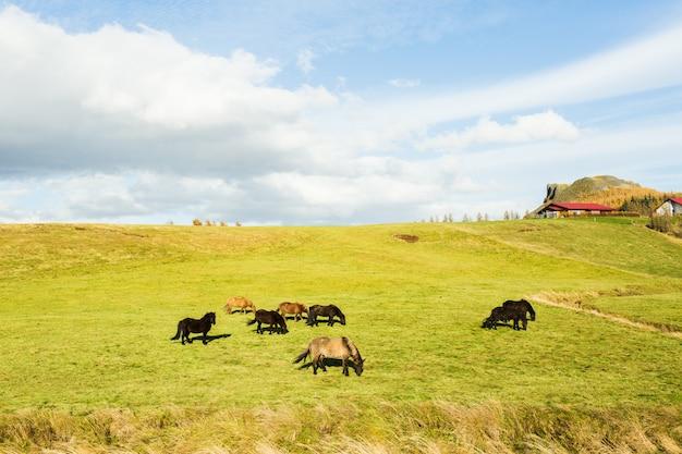 Escena rural