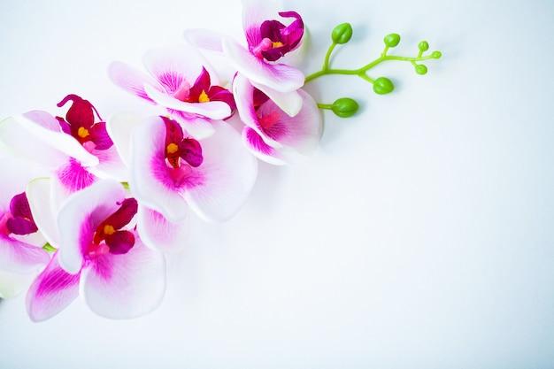 Escena de spa y bienestar. flor de orquídea en el pastel de madera