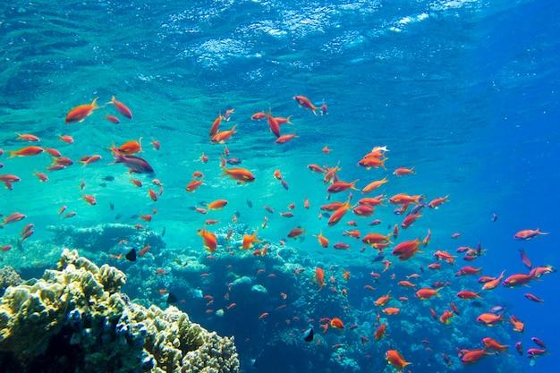 Escena tranquila bajo el agua