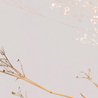 Espacio de diseño natural floral seco