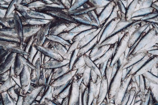 Espadines de pescado en el mercado de pescado. pescado fresco orgánico.