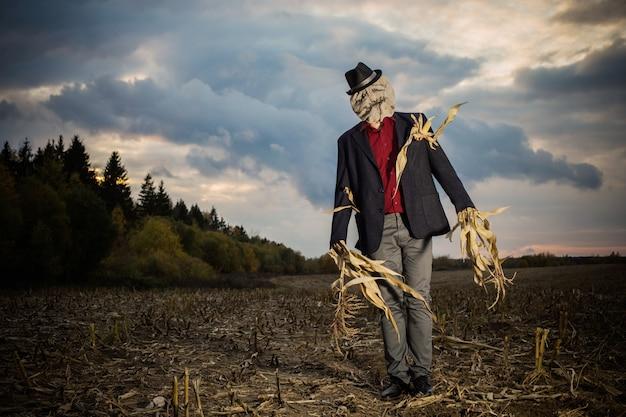 Espantapájaros está parado en el campo de otoño contra el cielo nocturno