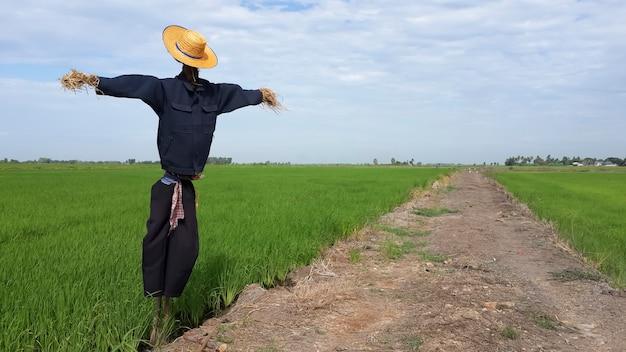 Espantapájaros proteger el campo de arroz de las aves