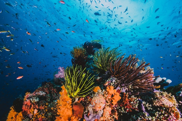 Espectacular paisaje marino de un coral tropical y peces con luz solar