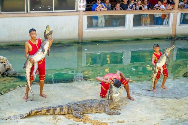 Espectáculo de cocodrilo