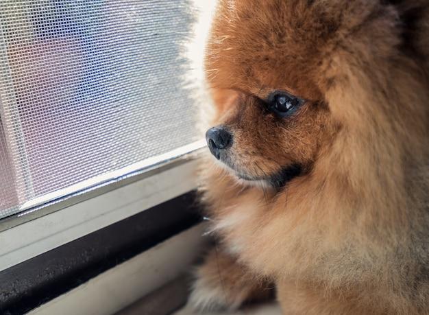 La espera es la esperanza del perro
