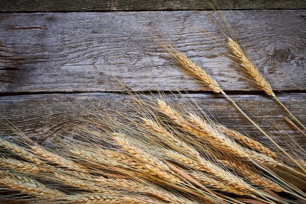 Espigas de trigo y granos en una tabla de madera oscura