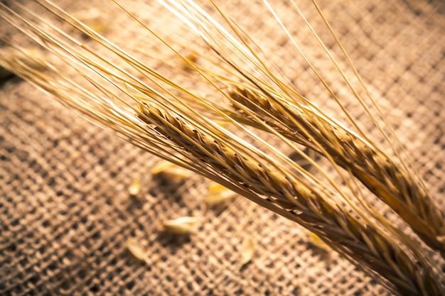 Espigas de trigo sobre una tela de saco