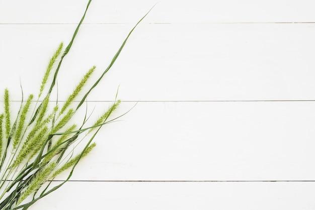 Espigas verdes y hierba en la pared de madera blanca