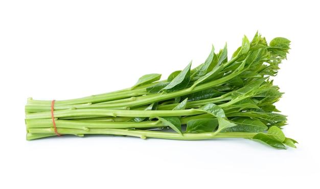 Espinaca de malabar o espinaca de ceilán aislada en blanco