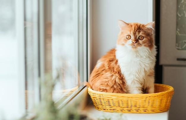 Un esponjoso gatito de jengibre se sienta en una cesta amarilla en el alféizar de una ventana.