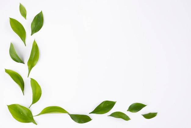 Esquina simple con hojas sobre fondo blanco