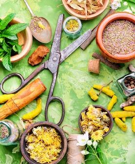 Establecer hierbas curativas