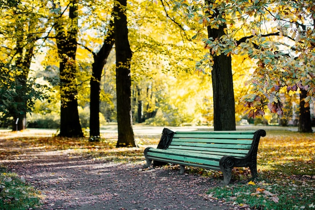 Estacione con un banco y un camino con hojas amarillas en el callejón de otoño.