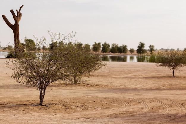 Estanque del desierto en un parque en dubai