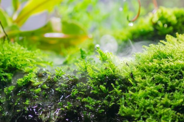 Estanque tropical rodeado de plantas verdes y musgo