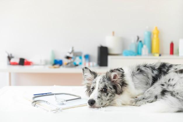 Estetoscopio en el portapapeles con el perro acostado en la mesa de operaciones en la clínica