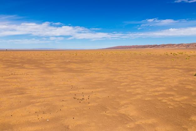 Estiércol de camello en el desierto del sahara